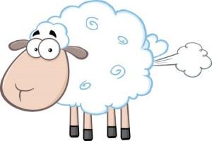 gassy sheep