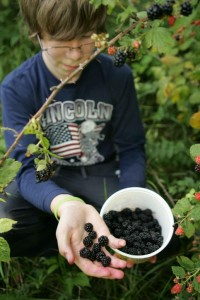 delicious-blackberries being picked