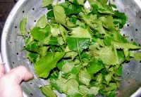 rinsed mint leaves