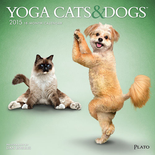 yoga cats and dogs_calendar
